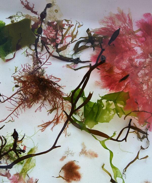 Algas 4 (fotografía). <br><h3>Adriana Pérez</h3>